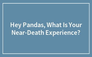 Hey Pandas, What Is Your Near-Death Experience?