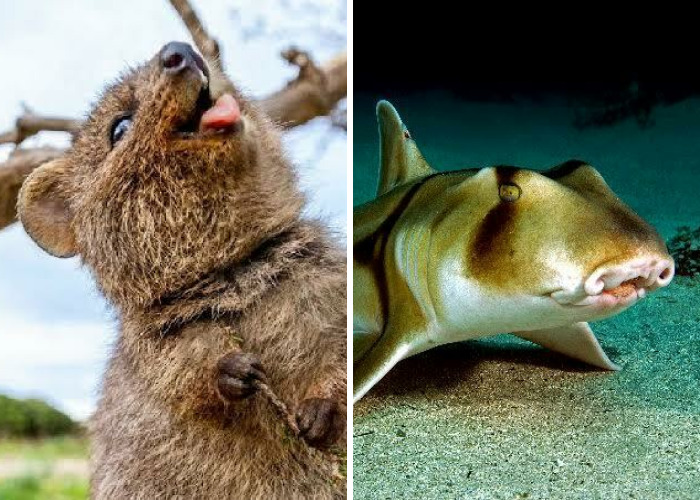 Here Are 40 Adorable, Scary, And Weird Australian Animals I Gathered