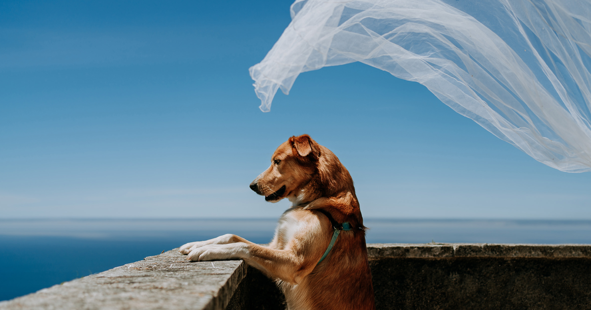 It's Not The Bride And The Groom That Are At The Center Of Attention Of Our Photo Competition, But Dogs (19 Pics)