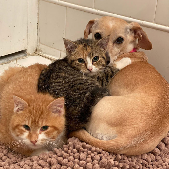 Dog Takes Shy Kittens Under Her Wing While They Build Up Courage To Interact With People