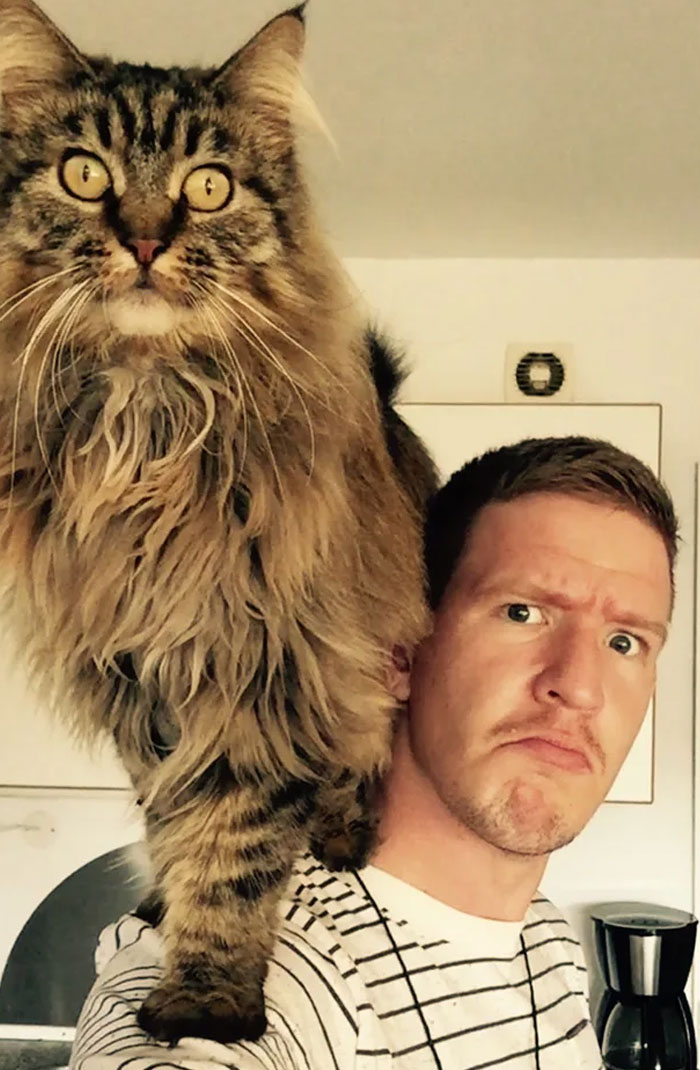 """My Crush Just Told Me Over Text That It Was """"Unmanly"""" For Men To Have A Cat. I Sent Her This"""
