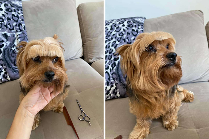 Mom Decides To Cut Dog's Hair Herself