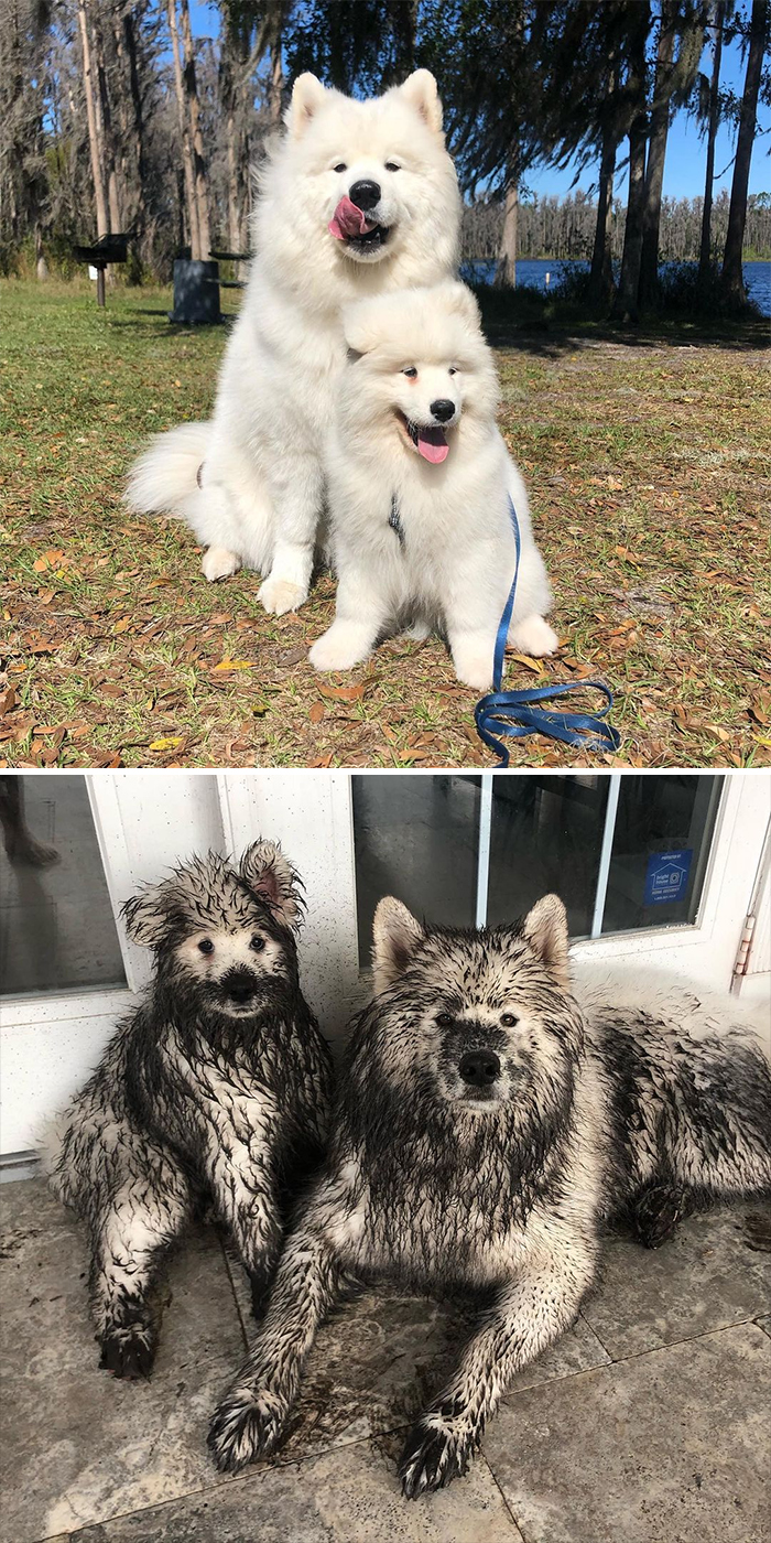 When You Leave Your Dogs Alone For Just A Few Minutes