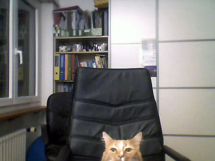 My Girlfriend Went To Get A Drink, And Her Cat Wanted To Skype Me Too
