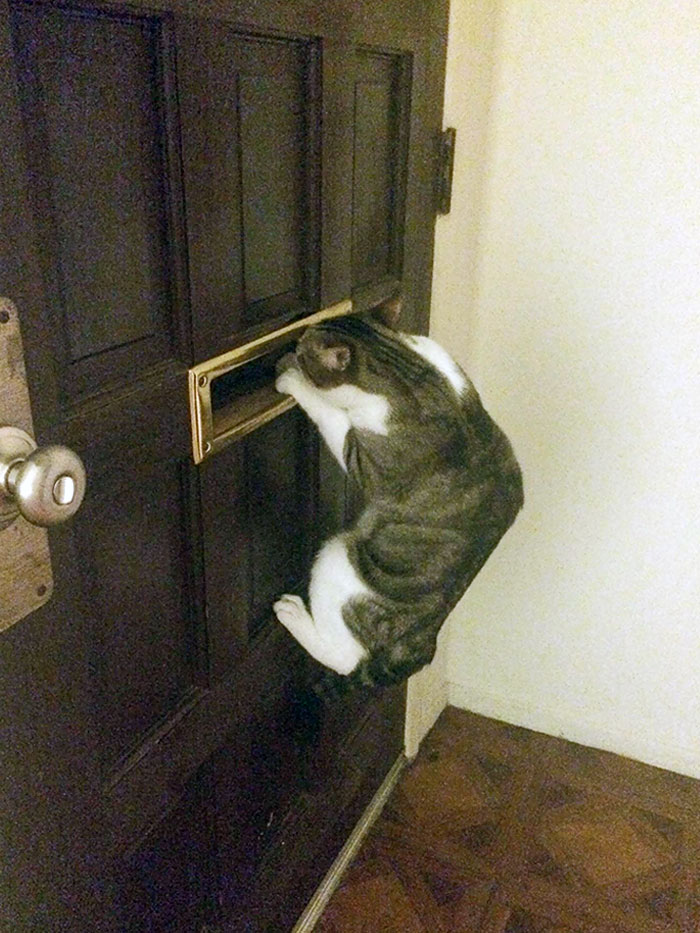 This Is How My Cat Waits For My Boyfriend To Come Home