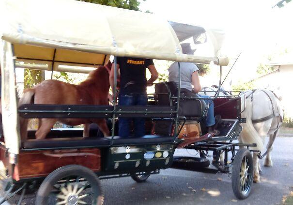 horseception-602ac6c70d2fd.jpg