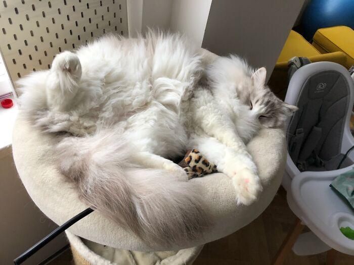He Loves Sleeping Like This
