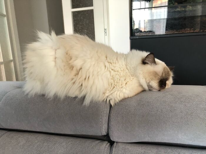 He Just Melts Into The Couch While Sleeping