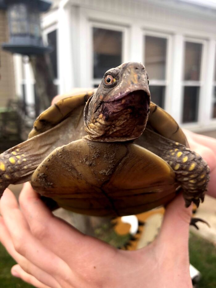 This Is My Turtle.i'm Really Happy With The Way The Picture Turned Out.his Name Is Hairy
