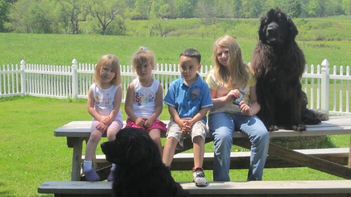 My Grandkids With Two Of Our Newfoundland's!