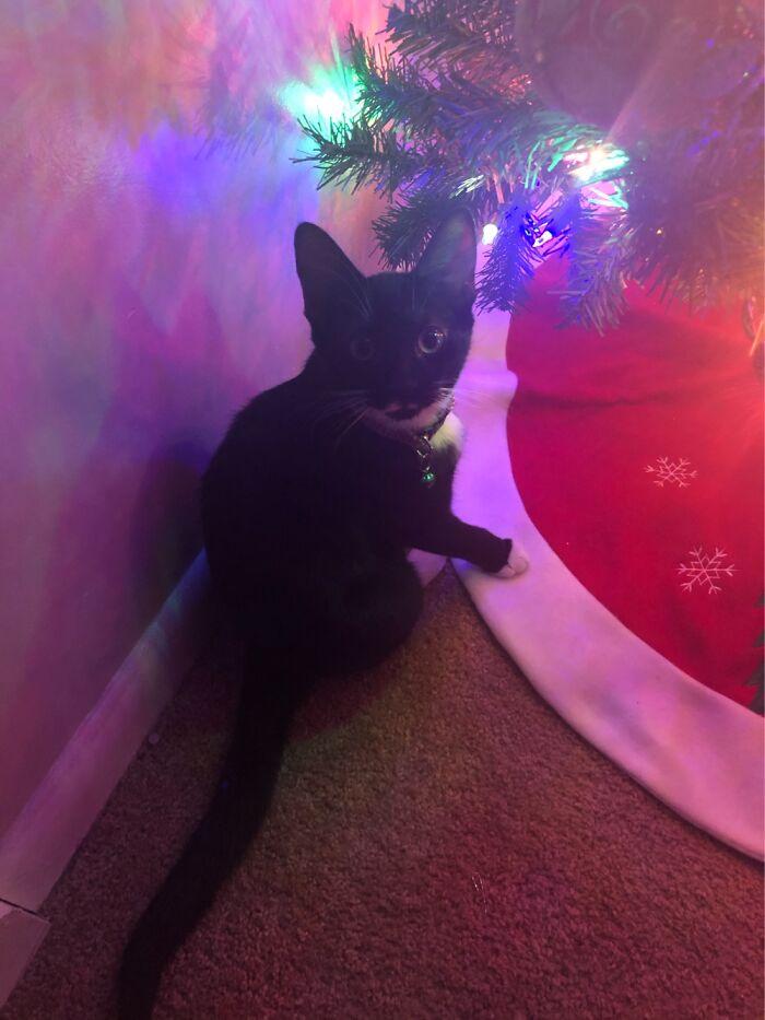 Bobbi Love To Destroy The Christmas Tree