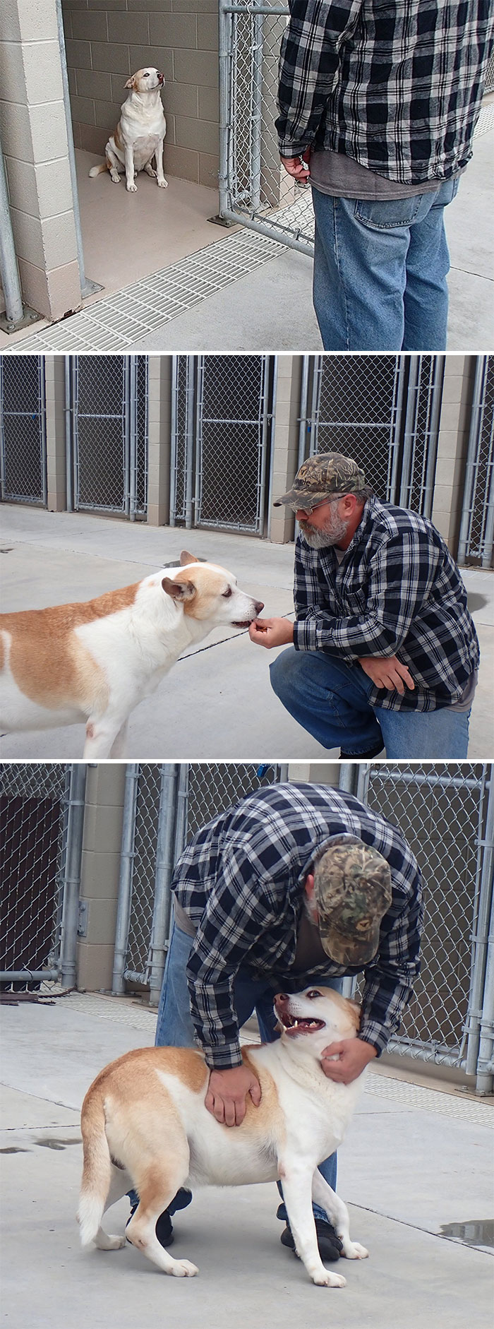 Dog Reunites With Its Owners After Three Years