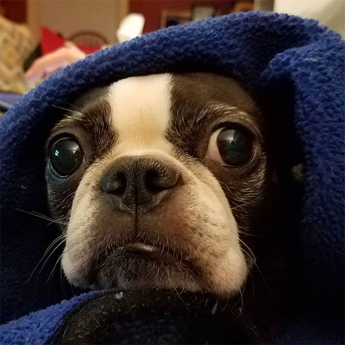 43 People Share How They Accidentally Conditioned Their Pets To Learn Unusual Skills Or Habits