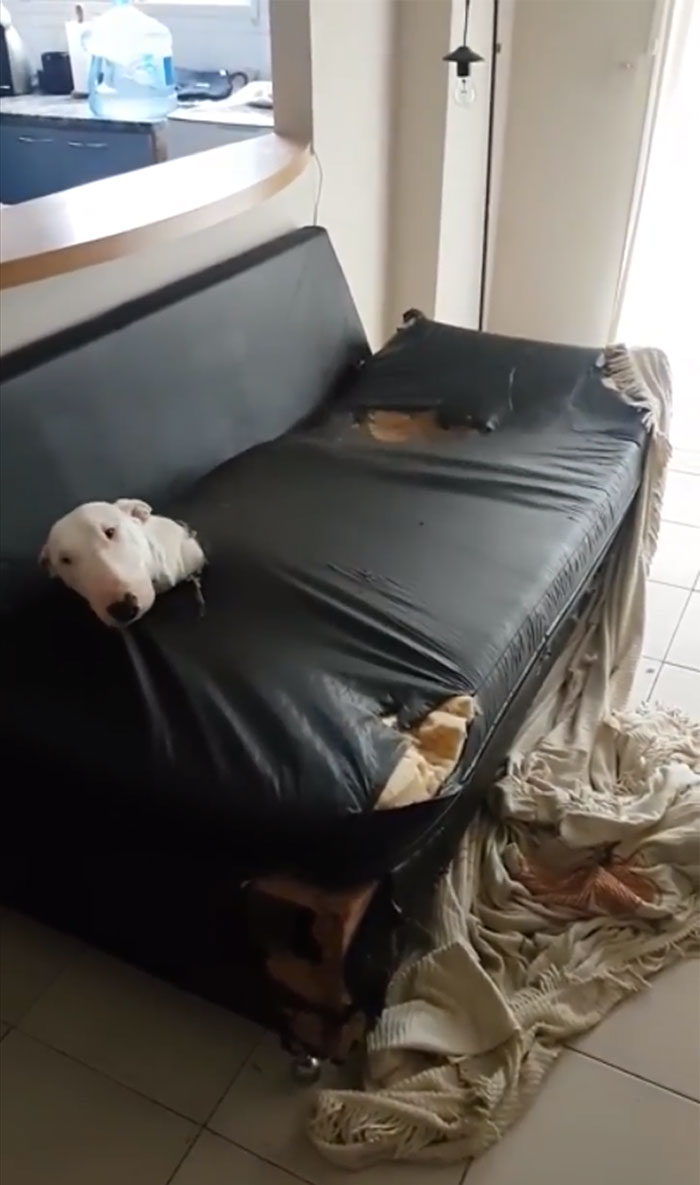 Alright, Who Destroyed The Couch?