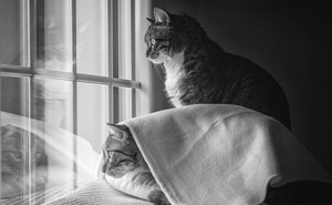 I Am A Catographer, Here Are 60 Photos Of Cats At The Window