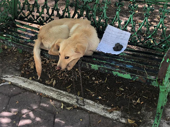 Child Leaves His Puppy On A Park Bench With A Heartbreaking Note Because His Parents Abused The Dog