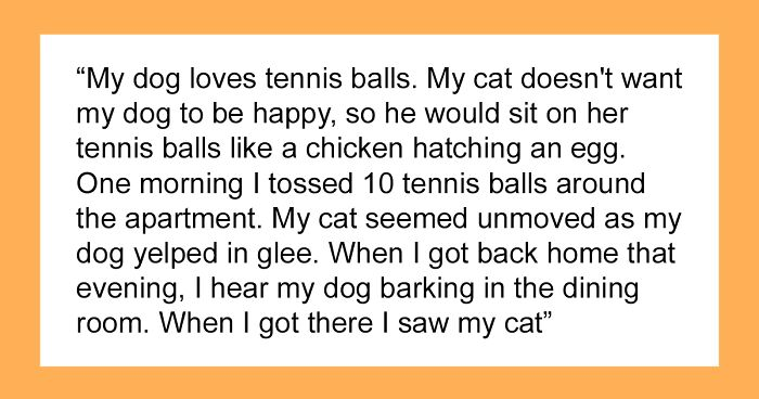 """People Are Sharing The """"Most Creepily Intelligent"""" Things Their Pets Have Done, And Here Are 41 Of The Best Responses"""