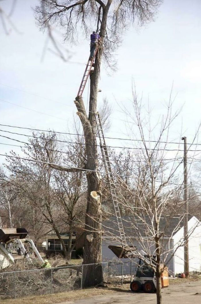 Tree Limb Removal- Oof