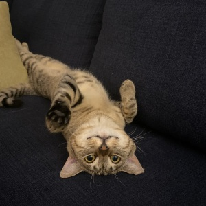 Hey Pandas, Post A Picture Of Your Pet In A Funny Pose