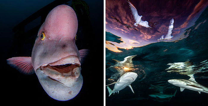 30 Mesmerizing Shots That Won The 2021 Underwater Photographer Of The Year Competition