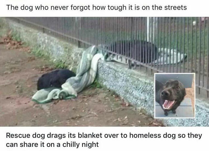 Rescue Dog Drags Its Blanket Over To A Homeless Dog So They Can Share It On A Chilly Night