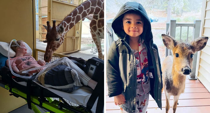 If You're Feeling Down, These 50 Wholesome Pics Might Lift You Up (New Pics)