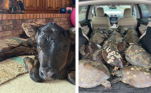 En Texas están resguardando a todo tipo de animales para protegerlos de la ola de frío (19 fotos)