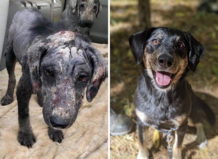 Millie, cuando fue rescatada en Mississippi y ahora. La mejor perrita