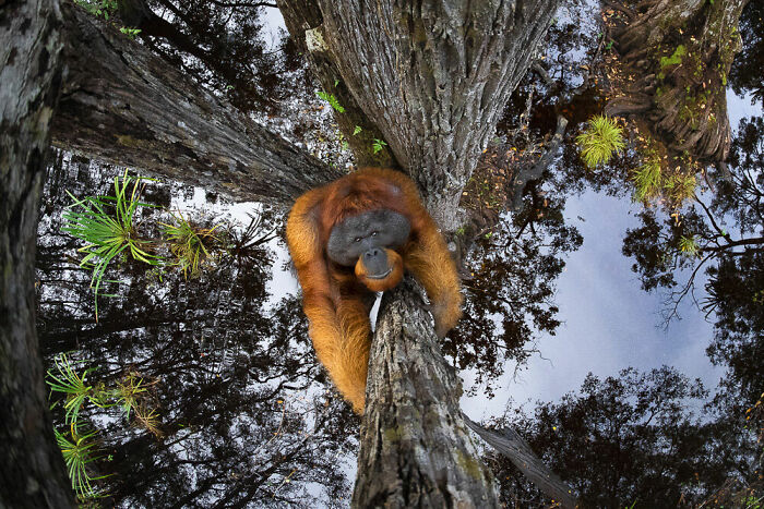 Animals In Their Habitat, Gold Winner And Grand Prize: Thomas Vijayan, Canada