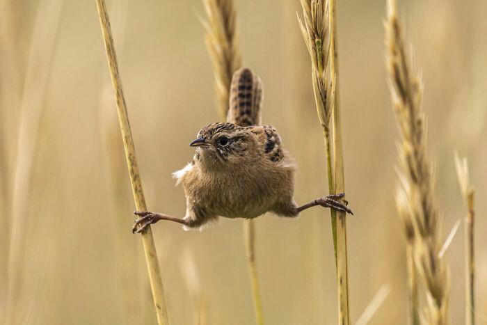 Behaviour - Birds, Silver: Andy Pollard, Falkland Islands