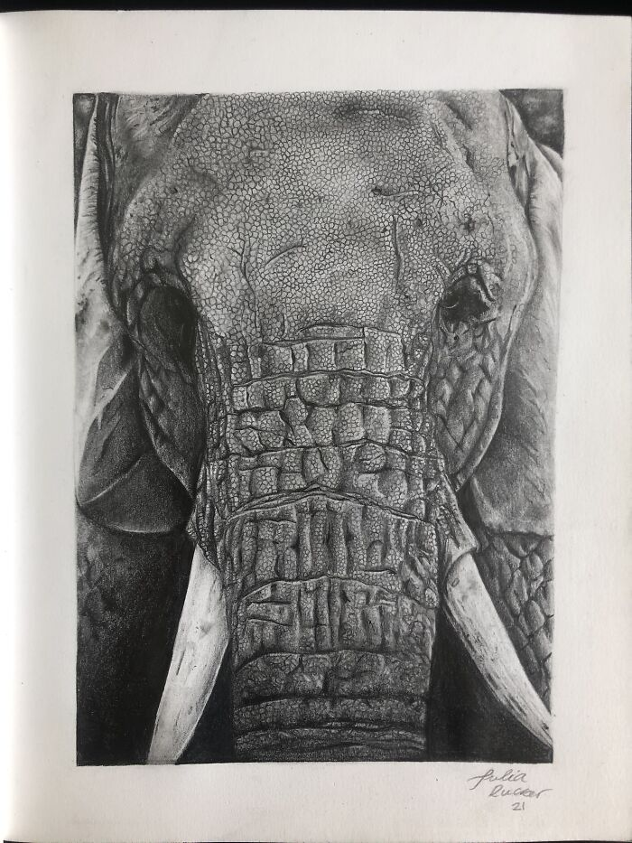 My Graphite Elephant!! Finished It For A School Contest 😃 You Can See More Of My Art On Instagram @art_by_juliaaa