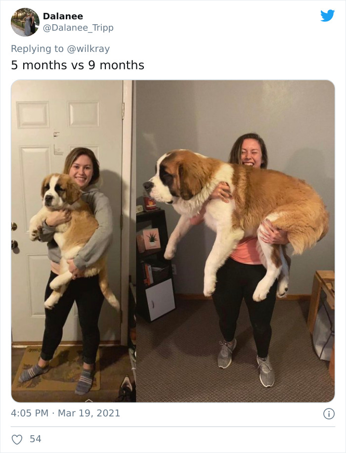 In A New Flash Mob On Twitter, Owners Have Fun With Photos Of Their Dogs As Puppies And How They Are Today