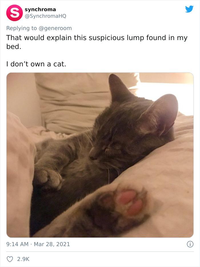 My-Home-Not-My-Cat-Pics
