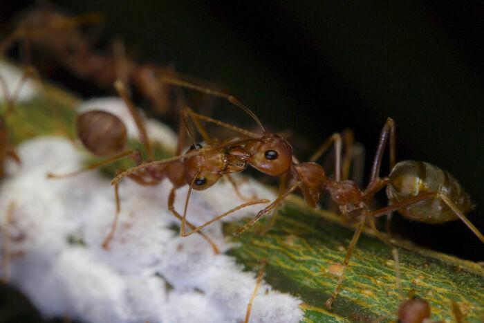 Behaviour - Invertebrates, Bronze: Janus Olajuan Boediman, Indonesia