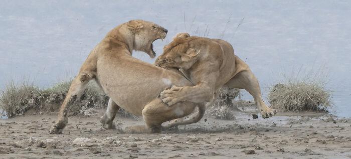 Behaviour - Mammals, Gold: Patrick Nowotny, United States
