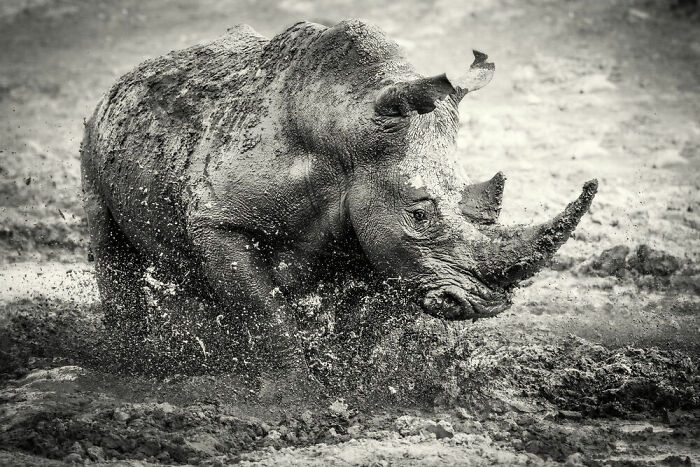 Behaviour - Mammals, Silver: Darren Donovan, South Africa