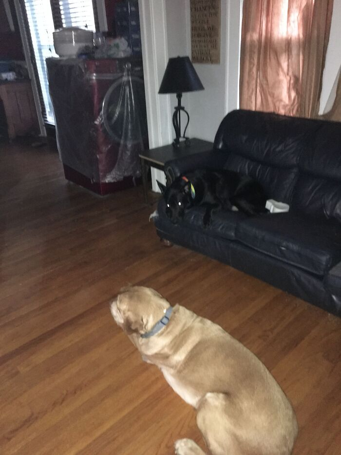 The Black One Is Charlie And The Other One Is Bones