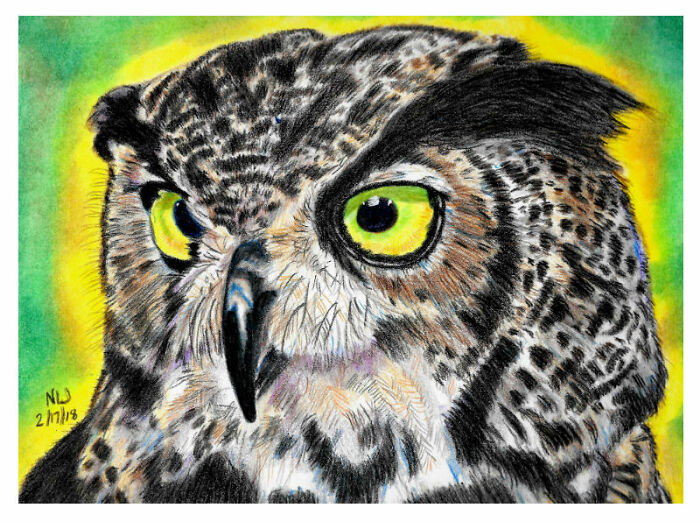 Great Horned Owl In Colored Pencil