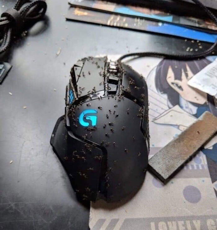 Dont Use Lemonade To Clean Your Mouse. I Thought The Acidity Would Clean Off The Buildup Of Crumbs And Cheeto Grease But It Just Attracted These Ants. I Left Home For 2 Days, Just To See This On My Desk