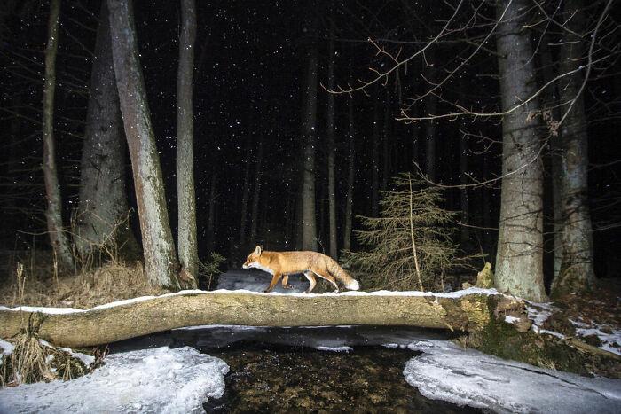 Animals In Their Habitat, Silver: Vladimir Cech, Czech Republic