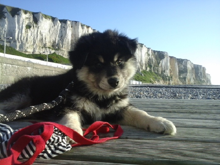 """My 2 Month Old Rascal """"I Was Not Chewing Your Beach Skirt..."""" Look"""