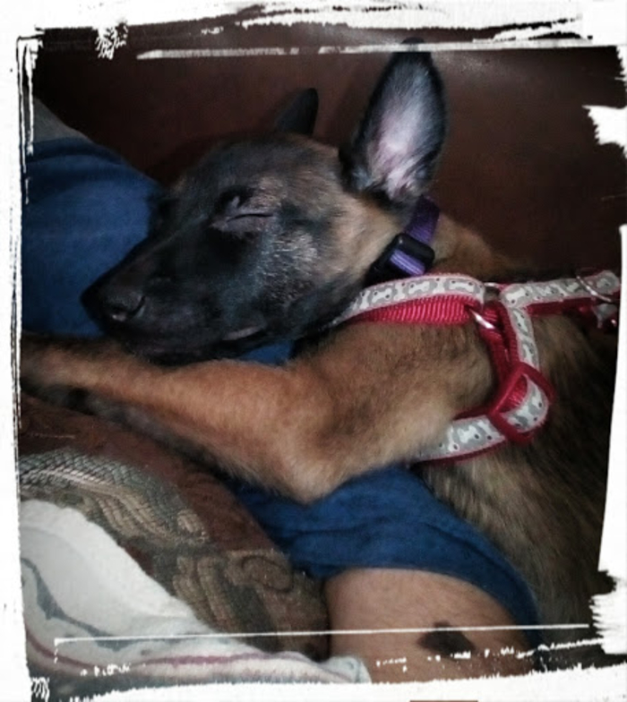 My Dog Faith Fell Asleep On My Arm