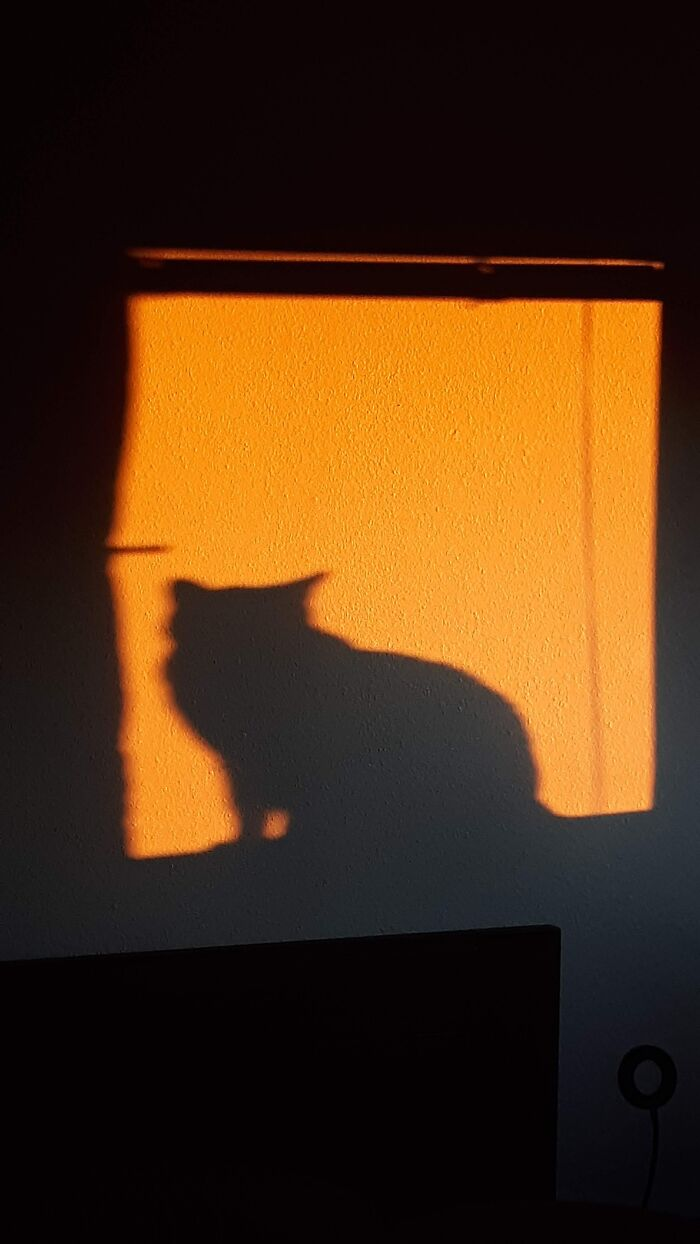 Waiting....watching...plotting Sinister Cat Deeds