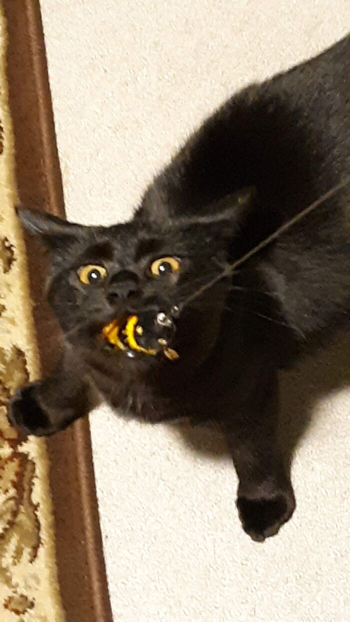 Tug Of War...with A Bee Toy....with My Cat. This Is His Favorite Game