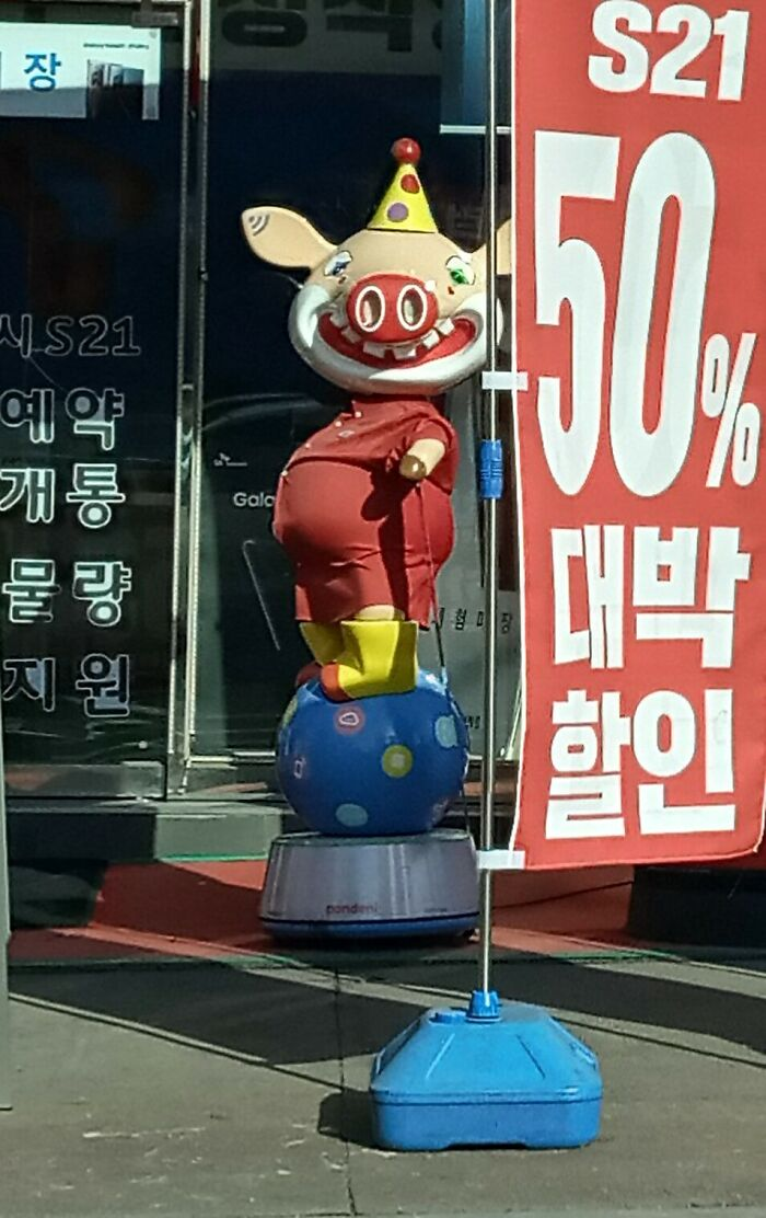 You Never Know What You Come Across In Korea...