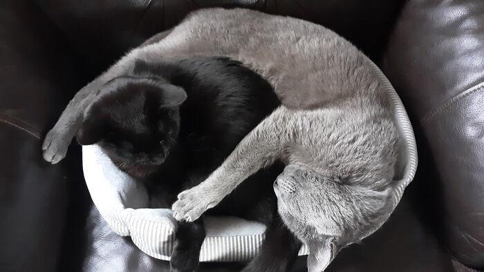 Sharing A Nap...