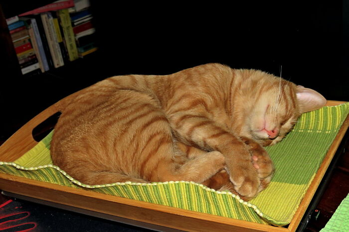Of Course, He Sleeps On The Laptop Keyboard In The Tray He Appropriated😊