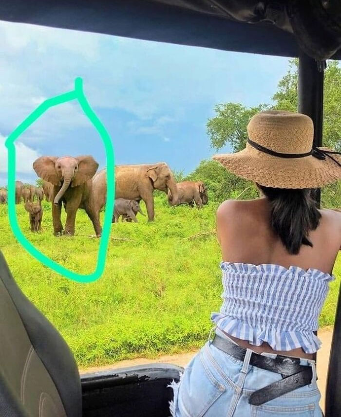 This Sri Lankan Influencer Photoshoped African Elephants To Her Photo. There Are Only Asian Elephants In Sl. All The Elephants Are Photoshoped