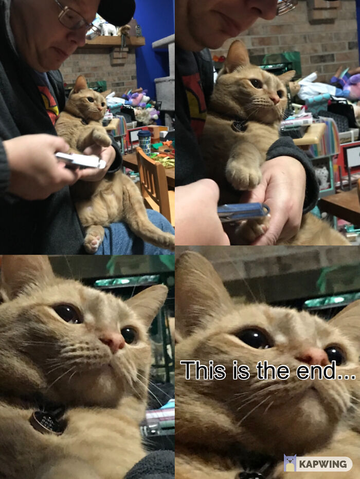 My Other Cats's Claws Being Clipped