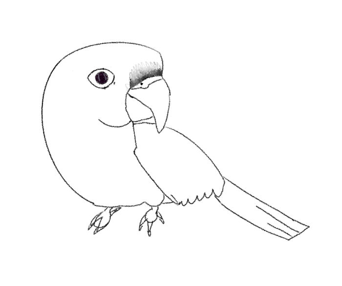 A Sketch Of My Bird/He's A Maroon-Bellied Conure.